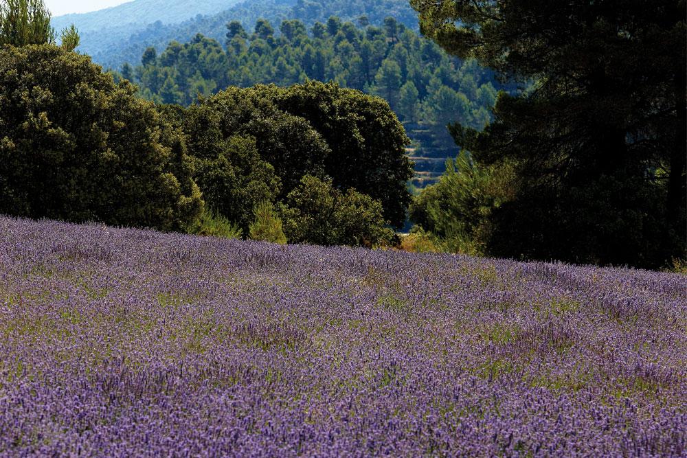 Foto Parque Natural Serra de Mariola