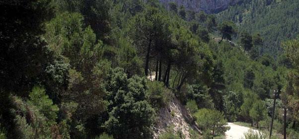 Foto GR-7 Font Roja - Font de Mariola